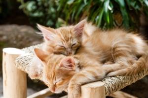 Katzenfutter von Robert Franz